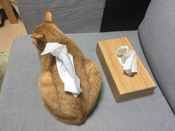 猫型ティッシュケース?画像はあわきち猫アカウント(@awkc_bot)さんから
