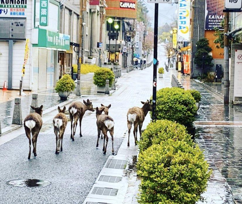鹿が闊歩(画像はそもんず(@somonsism)さんから)