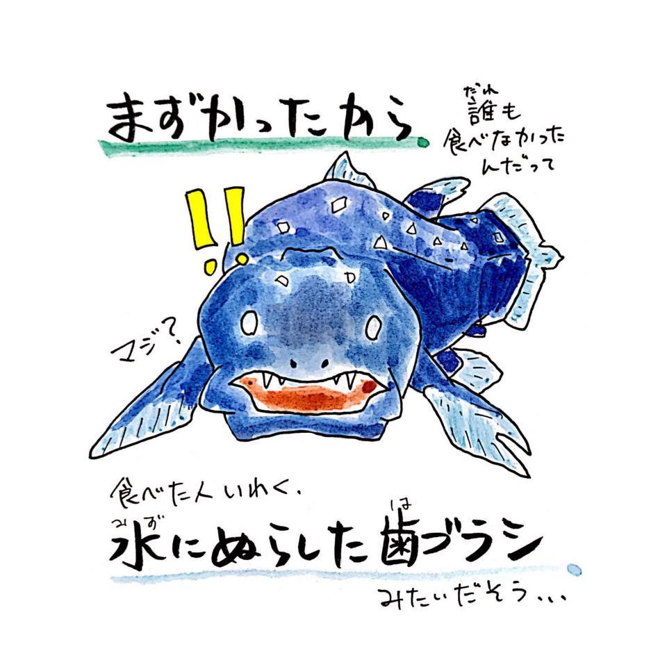 シーラカンスもびっくり(画像はさかなのおにいさん かわちゃん@sakana_broさん提供)