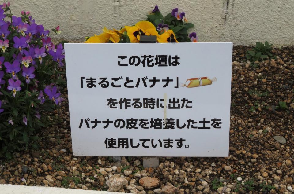まるごとバナナの皮が花壇の土に(画像は撥水教徒@c_daijiroさん提供)