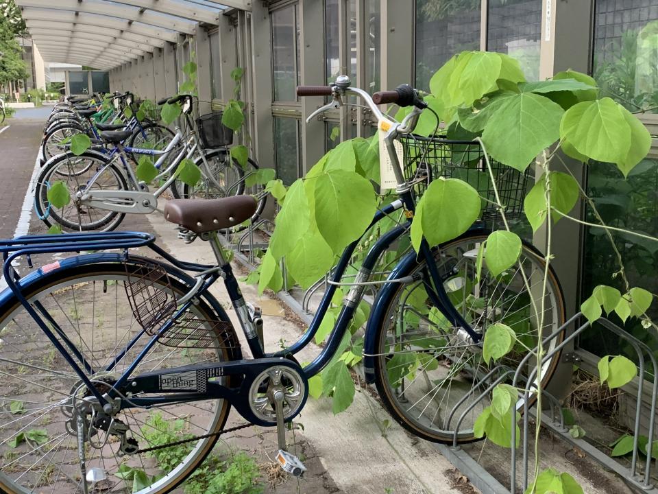 自転車にツタ...?