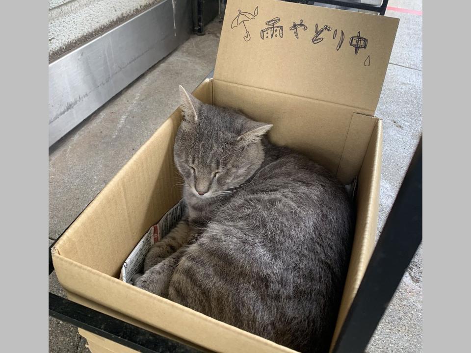 お手製ボックスで眠っている日も...(画像は千光寺山ロープウェイ公式ツイッター提供)