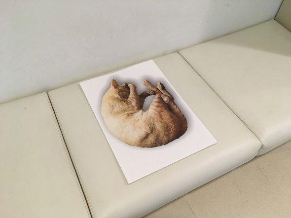 寝ながらソーシャルデイスタンスを訴える「ニャンモナイト」(写真提供:沖縄県立博物館・美術館)