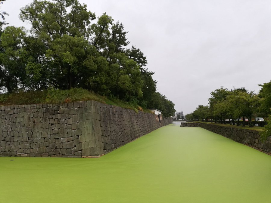 一面が緑色になっている(画像は永太郎@Naga_Kyotoさん提供)