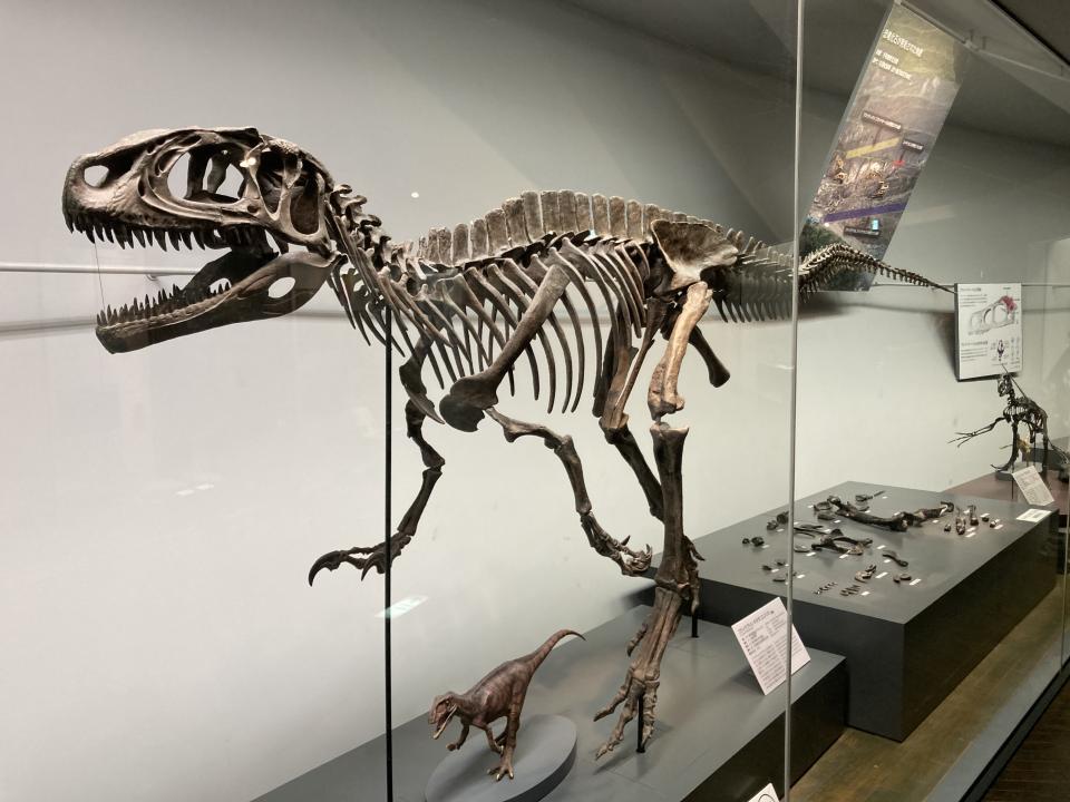フクイラプトル・キタダニエンシス(肉食恐竜)。ラプトルとは略奪者の意味だという。