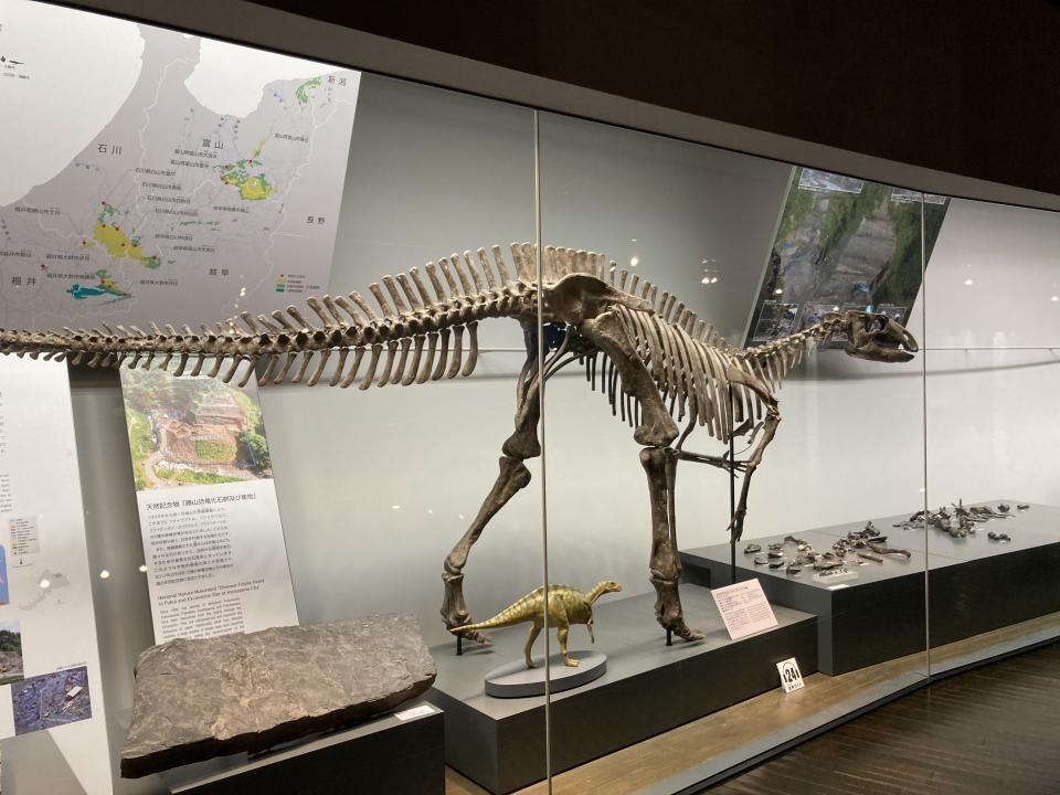 フクイサウルス・テトリエンシス(草食恐竜)。サウルスとは、トカゲの意味だという