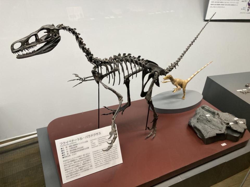 フクイベナートル・パラドクサス(雑食と考えられている)。ベナートルとは、狩人の意味。07年に全身の70%以上の骨がまとめて発見されている。