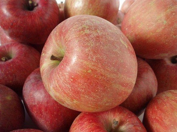 りんご(Batholithさん撮影、Wikimedia Commonsより)