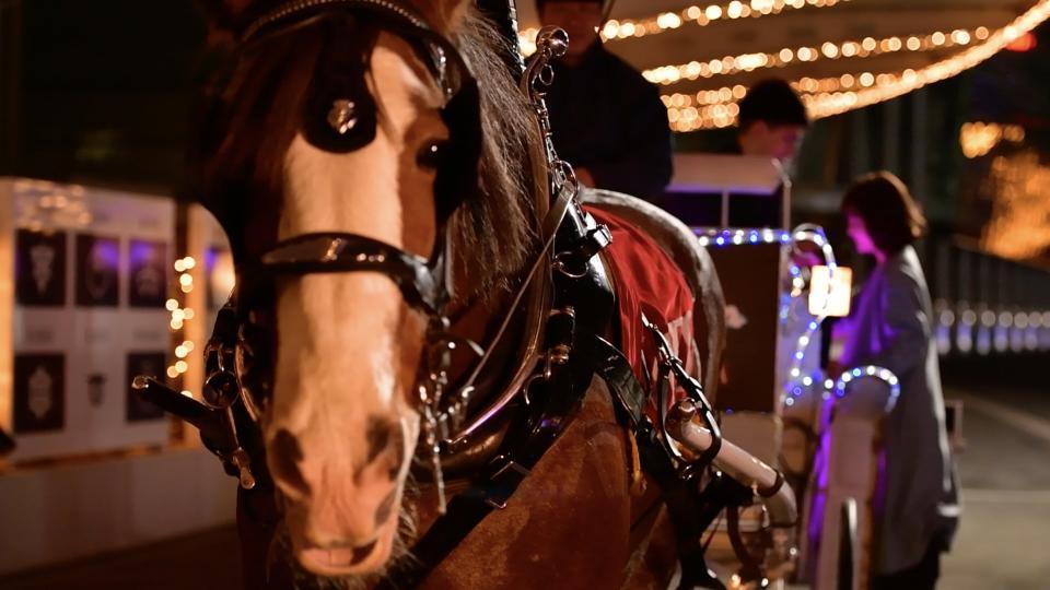 イルミネーションで彩られた馬車とクライズデールの「ウェス」