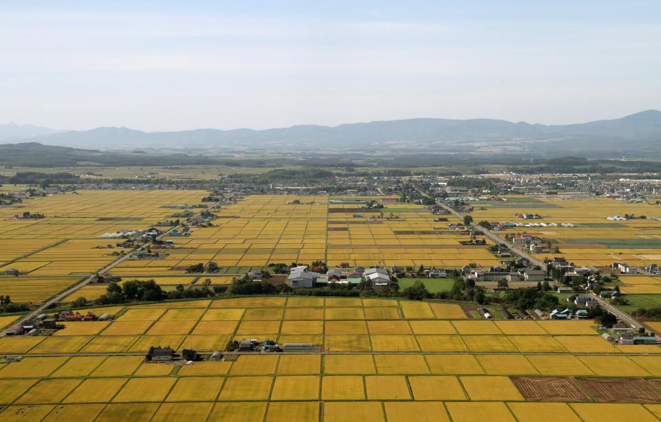 稲が実って黄金色に染まる田(写真提供:東川町)