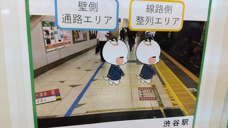 整列乗車をするしぶやぎ(画像は編集部撮影)