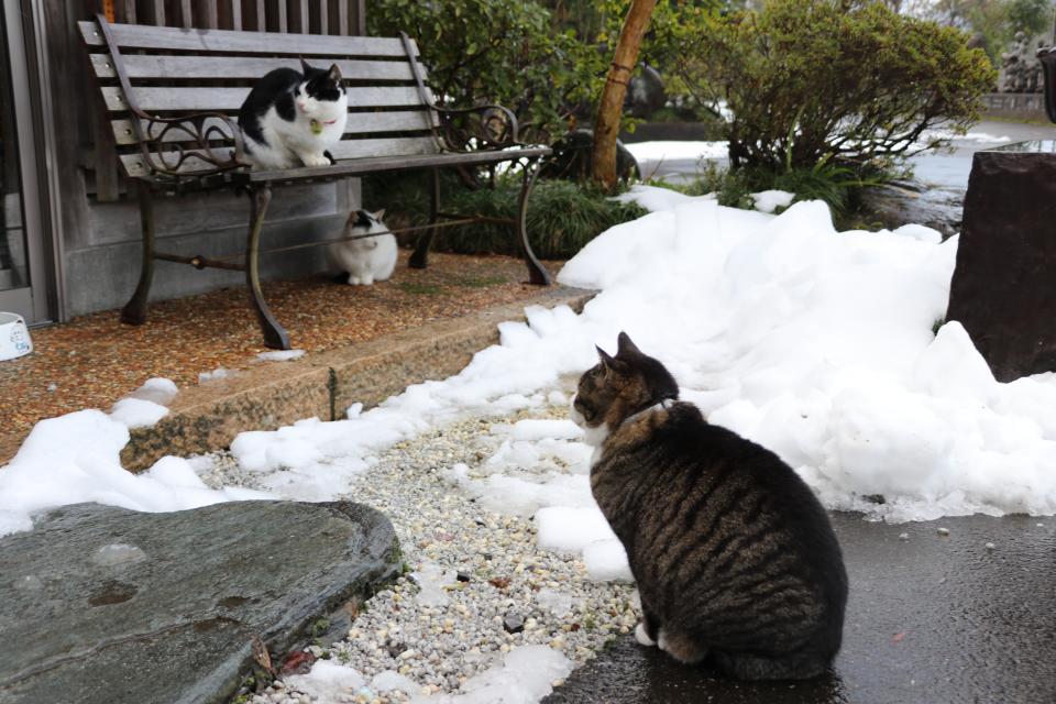 雪とにゃんこ、なんとも癒される光景だ......