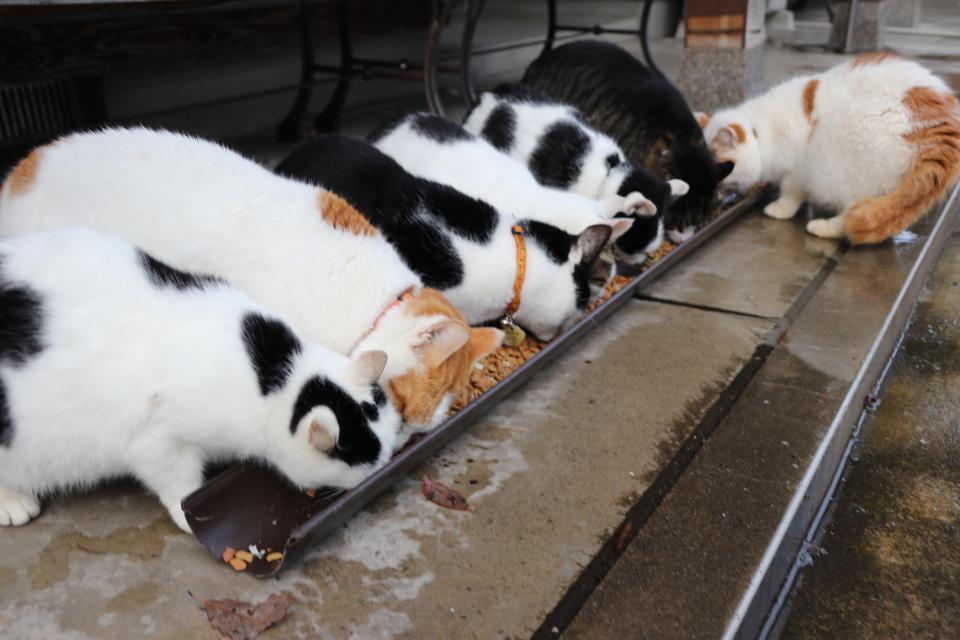 福井県は「ねこパラダイス」だった? 猫寺に猫島...猫派必見の「にゃんこスポット」3選
