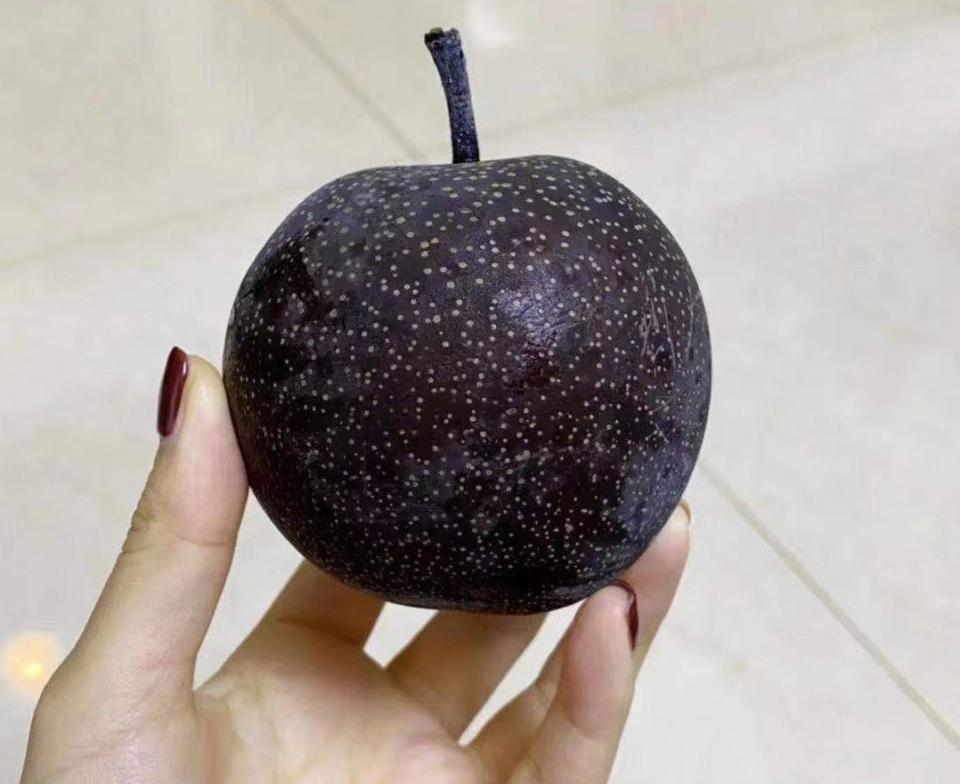 見たことのない果物だ(以下、画像は大阪七絃琴館(@windson0707)のツイートより)