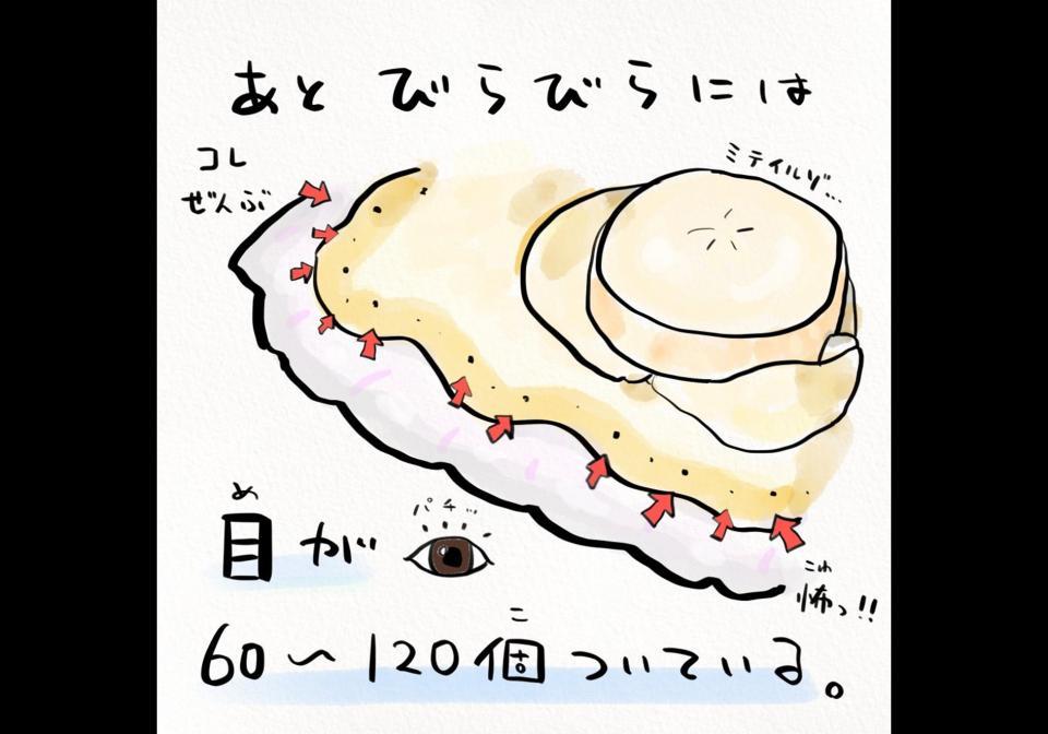 ひぇっ......全部「目」だったの、アレ?(以下、画像はさかなのおにいさん かわちゃん@sakana_broさん提供)